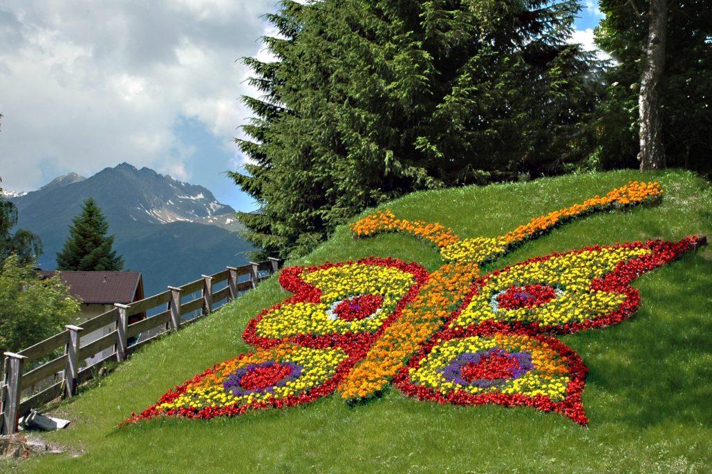 Unser Blumenschmetterling direkt am Ortsbeginn von Virgen